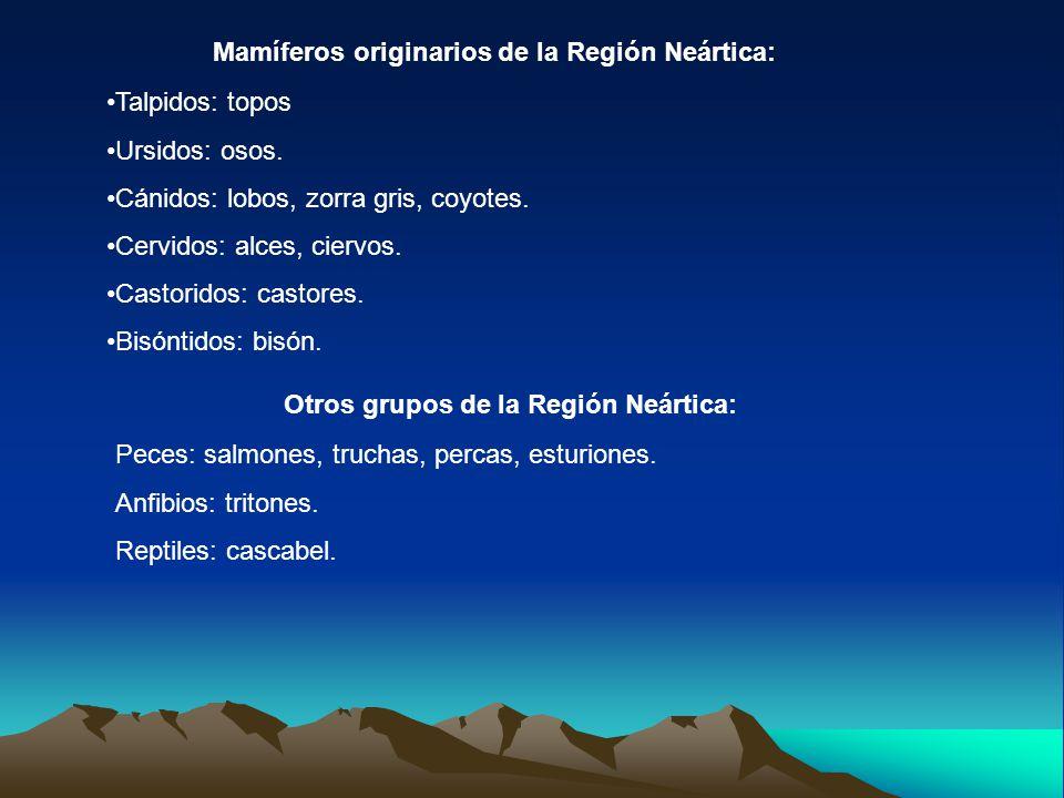 Mamíferos originarios de la Región Neártica: Talpidos: topos Ursidos: osos. Cánidos: lobos, zorra gris, coyotes. Cervidos: alces, ciervos. Castoridos: