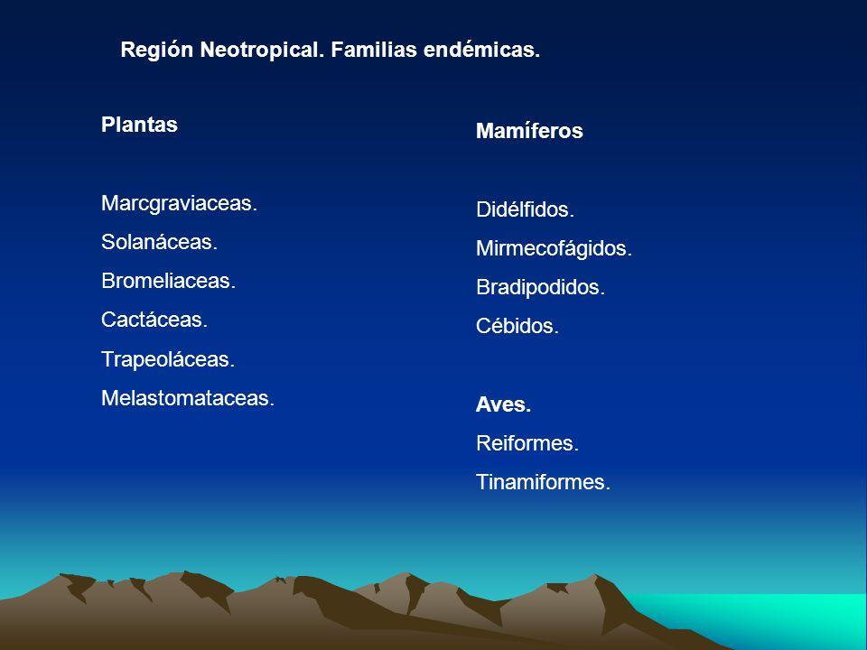 Región Neotropical. Familias endémicas. Plantas Marcgraviaceas. Solanáceas. Bromeliaceas. Cactáceas. Trapeoláceas. Melastomataceas. Mamíferos Didélfid