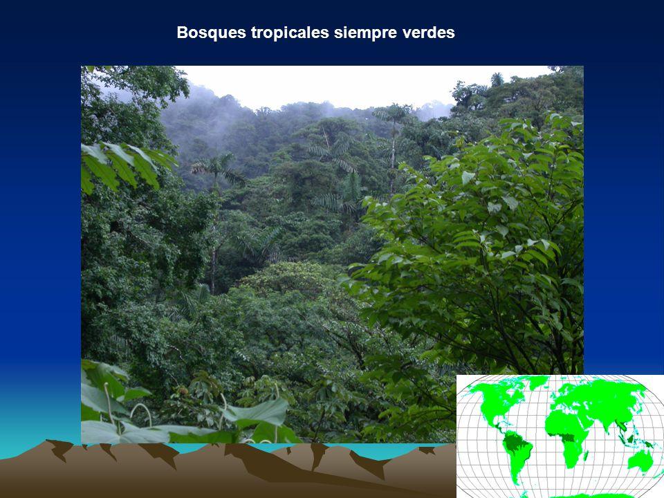 Bosques tropicales siempre verdes