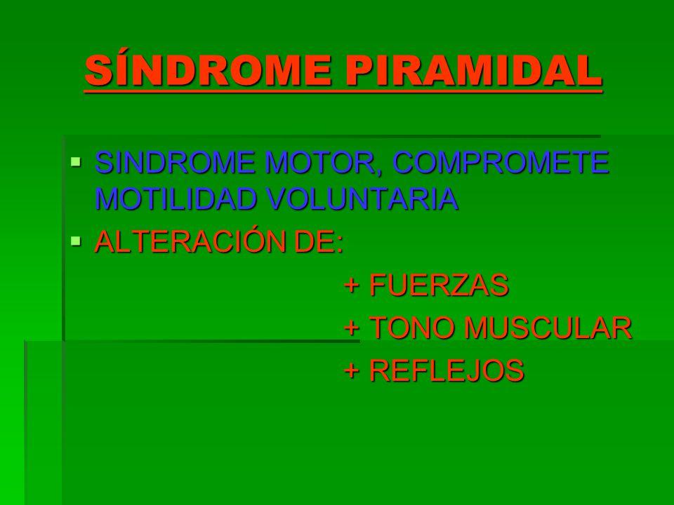 SÍNDROME PIRAMIDAL SINDROME MOTOR, COMPROMETE MOTILIDAD VOLUNTARIA SINDROME MOTOR, COMPROMETE MOTILIDAD VOLUNTARIA ALTERACIÓN DE: ALTERACIÓN DE: + FUE