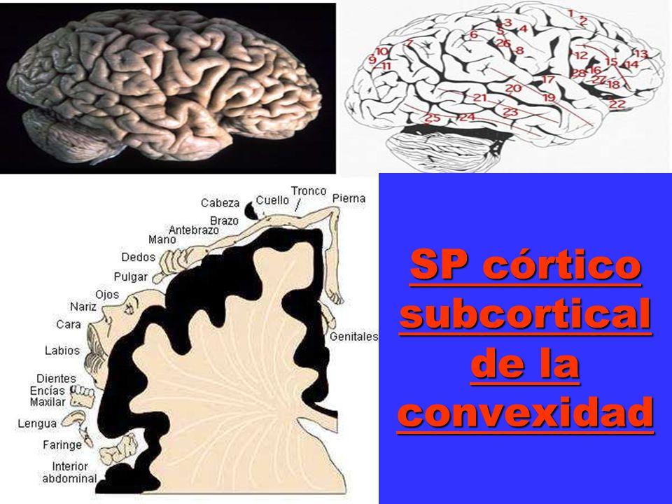SP córtico subcortical de la convexidad