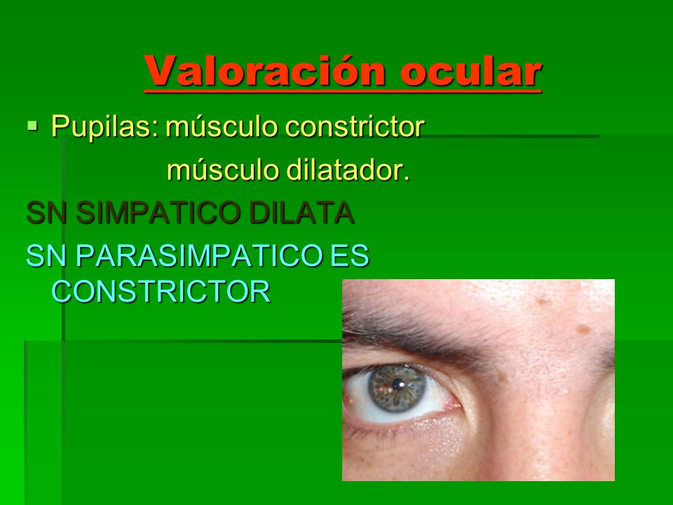 Valoración ocular Pupilas: músculo constrictor Pupilas: músculo constrictor músculo dilatador. músculo dilatador. SN SIMPATICO DILATA SN PARASIMPATICO