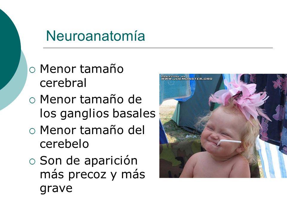 Neuroanatomía Menor tamaño cerebral Menor tamaño de los ganglios basales Menor tamaño del cerebelo Son de aparición más precoz y más grave