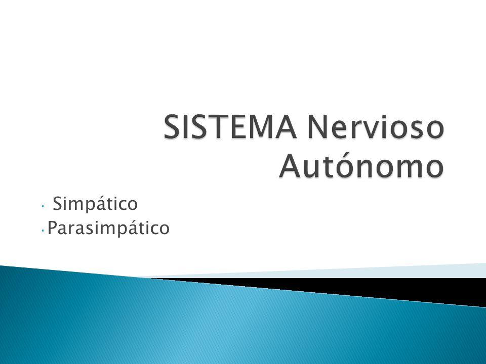 SISTEMA NERVIOSO CENTRAL -Encéfalo -Médula espinal SISTEMA NERVIOSO PERIFÉRICO -Nervios craneales -Nervios espinales DIVISIÓN SENSORA (Aferente) DIVISIÓN MOTORA (Eferente) Sistema nervioso Autónomo (involuntario) Sistema nervioso Somático (voluntario)