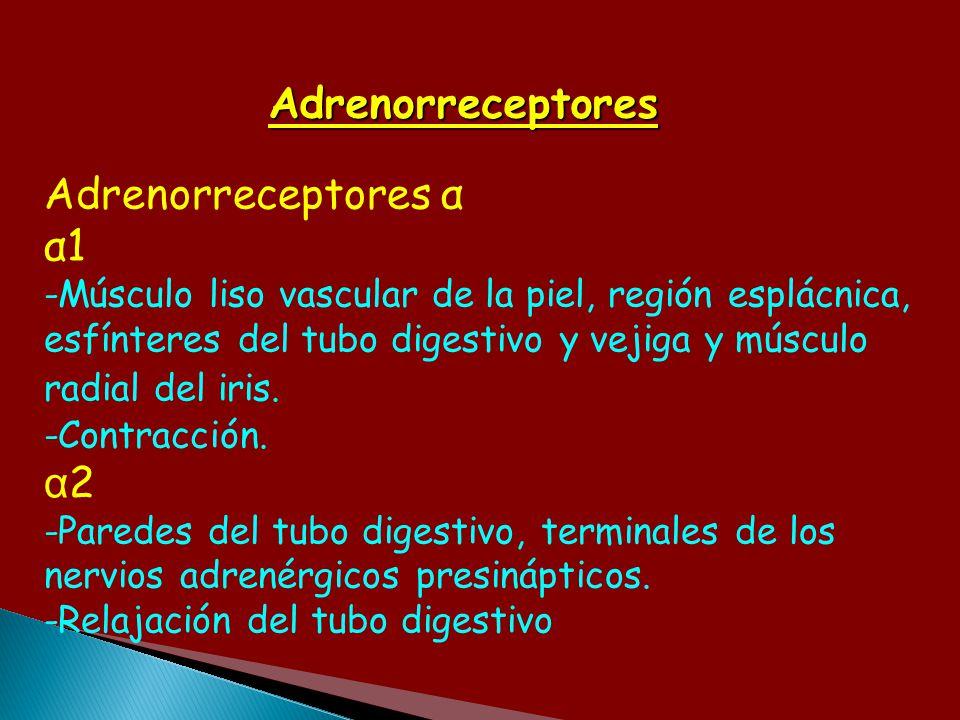 Adrenorreceptores Adrenorreceptores α α1 -Músculo liso vascular de la piel, región esplácnica, esfínteres del tubo digestivo y vejiga y músculo radial
