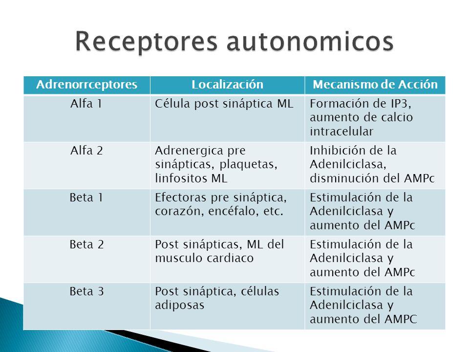 AdrenorrceptoresLocalizaciónMecanismo de Acción Alfa 1Célula post sináptica MLFormación de IP3, aumento de calcio intracelular Alfa 2Adrenergica pre s