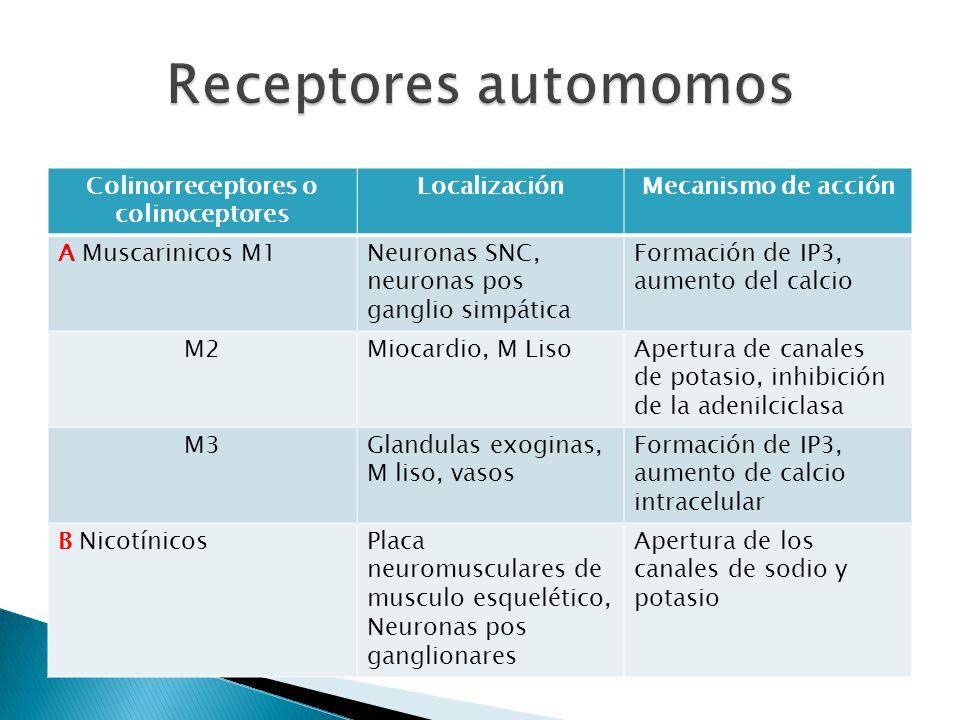 Colinorreceptores o colinoceptores LocalizaciónMecanismo de acción A Muscarinicos M1Neuronas SNC, neuronas pos ganglio simpática Formación de IP3, aum