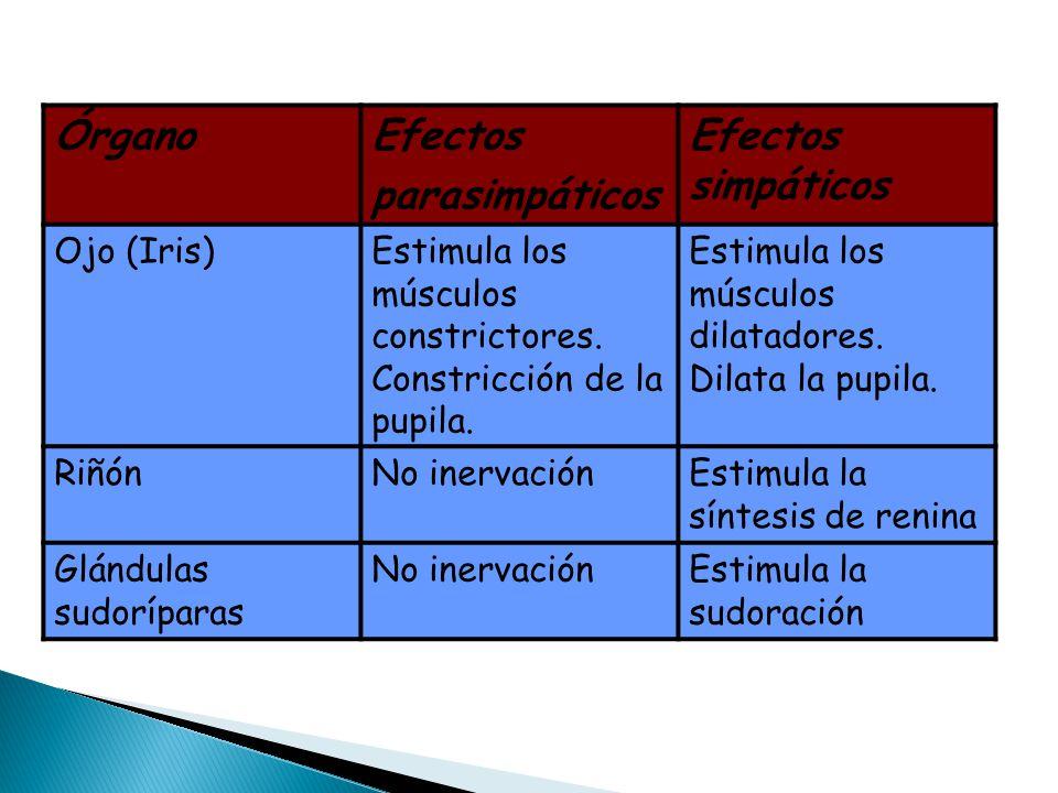 ÓrganoEfectos parasimpáticos Efectos simpáticos Ojo (Iris)Estimula los músculos constrictores. Constricción de la pupila. Estimula los músculos dilata