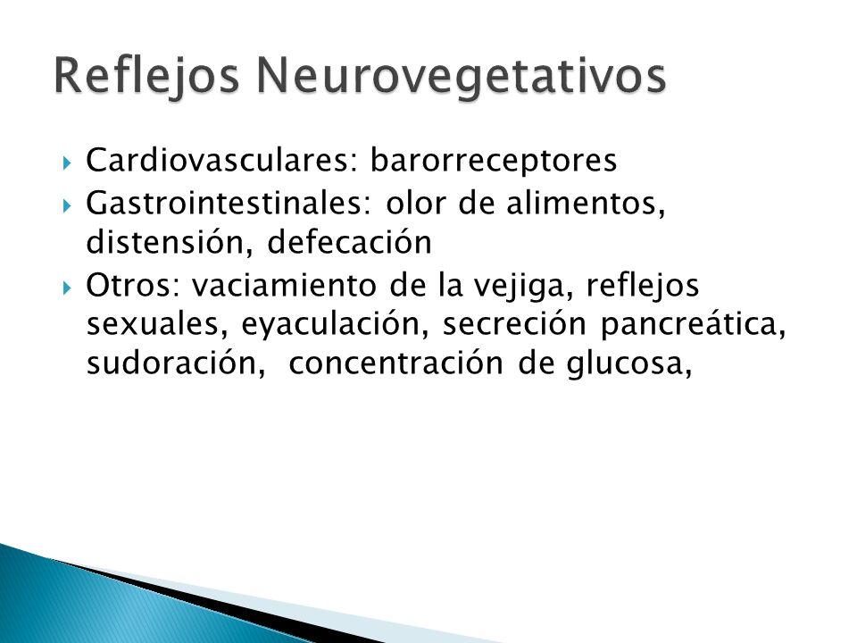 Cardiovasculares: barorreceptores Gastrointestinales: olor de alimentos, distensión, defecación Otros: vaciamiento de la vejiga, reflejos sexuales, ey