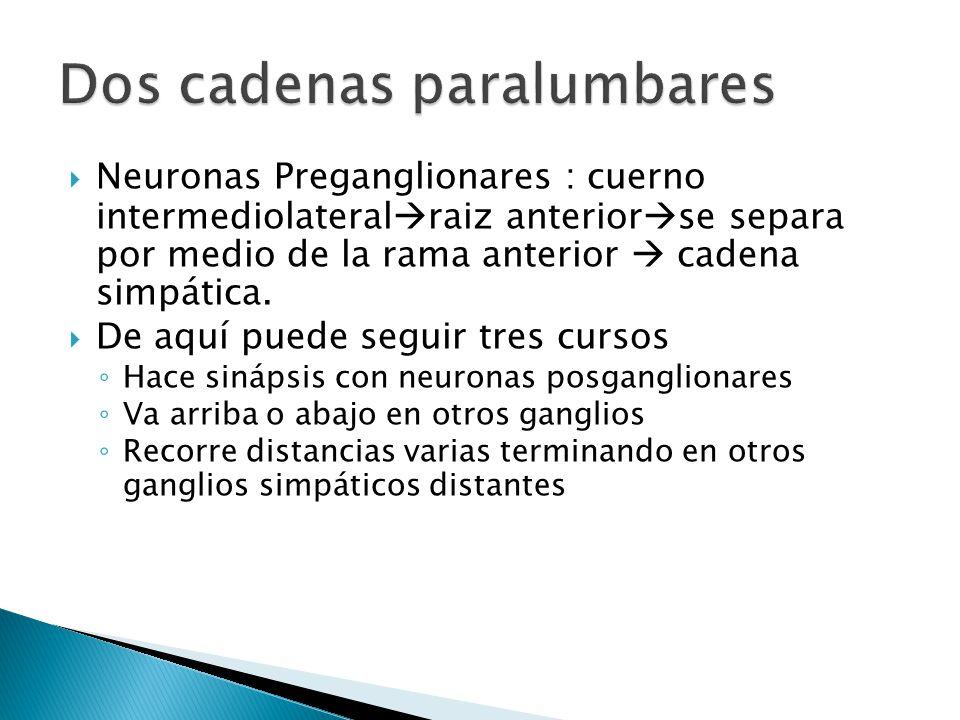 Colinorreceptores Nicotínicos -Placa motora del músculo esquelético, neuronas postganglionares.