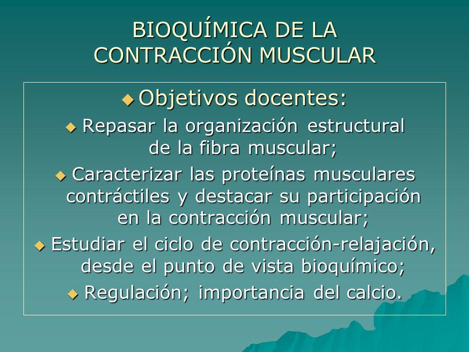 BIOQUÍMICA DE LA CONTRACCIÓN MUSCULAR El músculo es el principal transductor bioquímico que convierte la energía potencial (química) en energía cinética (mecánica).