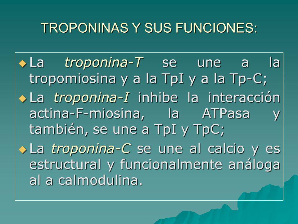 TROPONINAS Y SUS FUNCIONES: La troponina-T se une a la tropomiosina y a la TpI y a la Tp-C; La troponina-T se une a la tropomiosina y a la TpI y a la Tp-C; La troponina-I inhibe la interacción actina-F-miosina, la ATPasa y también, se une a TpI y TpC; La troponina-I inhibe la interacción actina-F-miosina, la ATPasa y también, se une a TpI y TpC; La troponina-C se une al calcio y es estructural y funcionalmente análoga al a calmodulina.