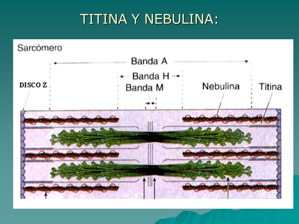 TITINA Y NEBULINA: