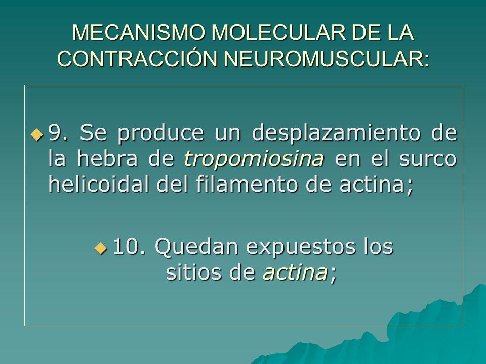 MECANISMO MOLECULAR DE LA CONTRACCIÓN NEUROMUSCULAR: 9.