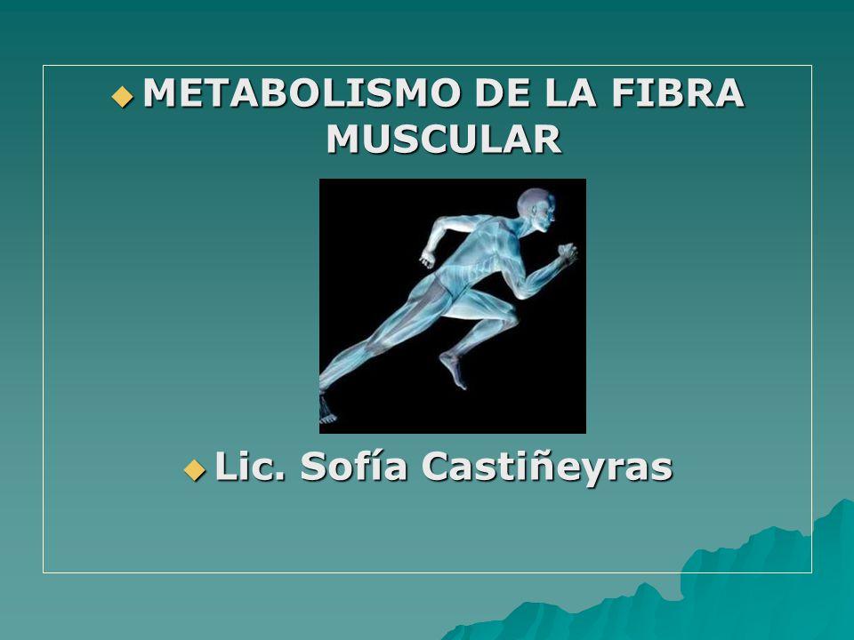 METABOLISMO DE LA FIBRA MUSCULAR METABOLISMO DE LA FIBRA MUSCULAR Lic. Sofía Castiñeyras Lic. Sofía Castiñeyras