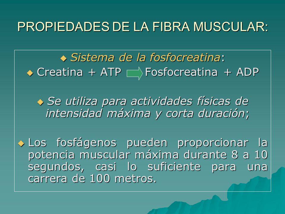 PROPIEDADES DE LA FIBRA MUSCULAR: Sistema de la fosfocreatina: Sistema de la fosfocreatina: Creatina + ATP Fosfocreatina + ADP Creatina + ATP Fosfocreatina + ADP Se utiliza para actividades físicas de intensidad máxima y corta duración; Se utiliza para actividades físicas de intensidad máxima y corta duración; Los fosfágenos pueden proporcionar la potencia muscular máxima durante 8 a 10 segundos, casi lo suficiente para una carrera de 100 metros.