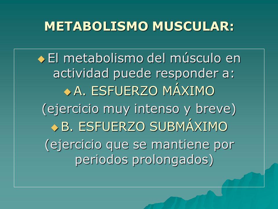METABOLISMO MUSCULAR: El metabolismo del músculo en actividad puede responder a: El metabolismo del músculo en actividad puede responder a: A.