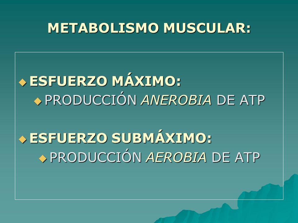 METABOLISMO MUSCULAR: ESFUERZO MÁXIMO: ESFUERZO MÁXIMO: PRODUCCIÓN ANEROBIA DE ATP PRODUCCIÓN ANEROBIA DE ATP ESFUERZO SUBMÁXIMO: ESFUERZO SUBMÁXIMO: PRODUCCIÓN AEROBIA DE ATP PRODUCCIÓN AEROBIA DE ATP