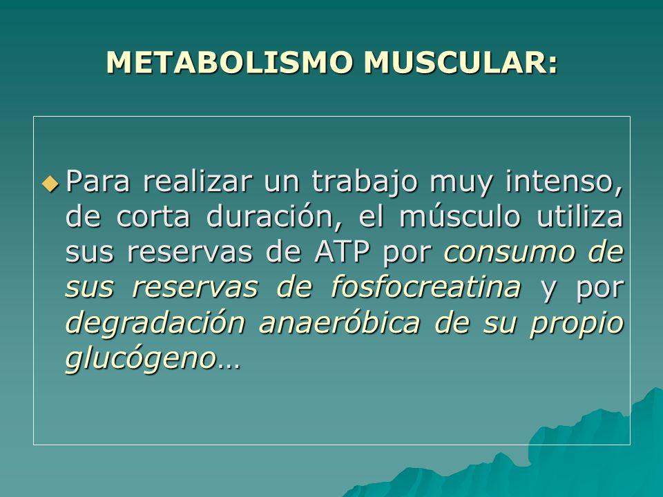 Para realizar un trabajo muy intenso, de corta duración, el músculo utiliza sus reservas de ATP por consumo de sus reservas de fosfocreatina y por degradación anaeróbica de su propio glucógeno… Para realizar un trabajo muy intenso, de corta duración, el músculo utiliza sus reservas de ATP por consumo de sus reservas de fosfocreatina y por degradación anaeróbica de su propio glucógeno… METABOLISMO MUSCULAR: