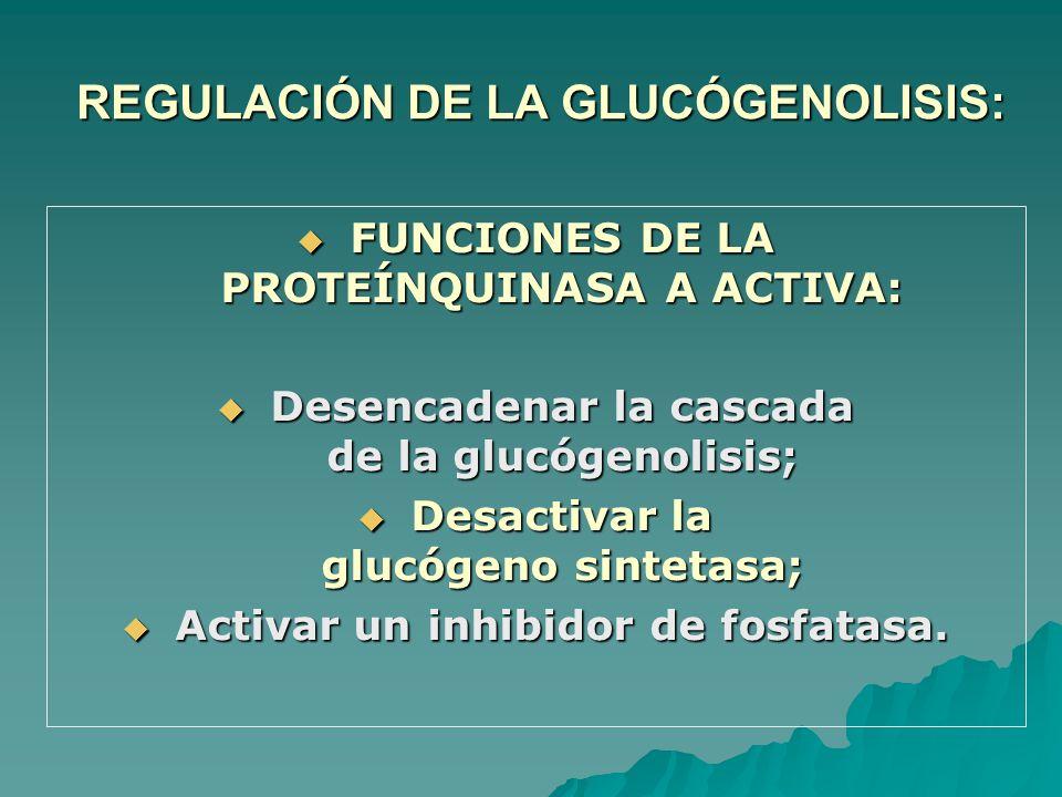 REGULACIÓN DE LA GLUCÓGENOLISIS: FUNCIONES DE LA PROTEÍNQUINASA A ACTIVA: FUNCIONES DE LA PROTEÍNQUINASA A ACTIVA: Desencadenar la cascada de la glucógenolisis; Desencadenar la cascada de la glucógenolisis; Desactivar la glucógeno sintetasa; Desactivar la glucógeno sintetasa; Activar un inhibidor de fosfatasa.