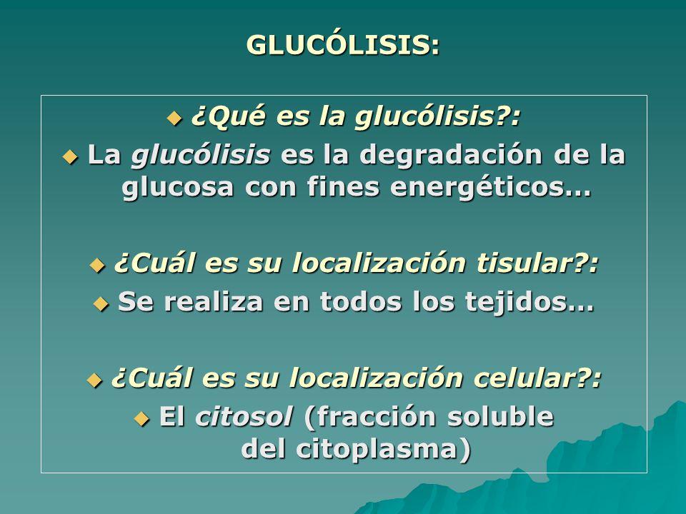 GLUCÓLISIS: ¿Qué es la glucólisis?: ¿Qué es la glucólisis?: La glucólisis es la degradación de la glucosa con fines energéticos… La glucólisis es la degradación de la glucosa con fines energéticos… ¿Cuál es su localización tisular?: ¿Cuál es su localización tisular?: Se realiza en todos los tejidos… Se realiza en todos los tejidos… ¿Cuál es su localización celular?: ¿Cuál es su localización celular?: El citosol (fracción soluble del citoplasma) El citosol (fracción soluble del citoplasma)