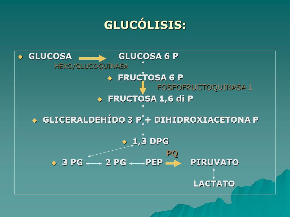 GLUCÓLISIS: GLUCOSA GLUCOSA 6 P GLUCOSA GLUCOSA 6 P FRUCTOSA 6 P FRUCTOSA 6 P FRUCTOSA 1,6 di P FRUCTOSA 1,6 di P GLICERALDEHÍDO 3 P + DIHIDROXIACETON