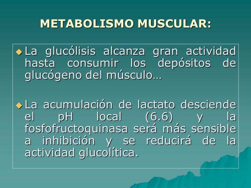 METABOLISMO MUSCULAR: La glucólisis alcanza gran actividad hasta consumir los depósitos de glucógeno del músculo… La glucólisis alcanza gran actividad hasta consumir los depósitos de glucógeno del músculo… La acumulación de lactato desciende el pH local (6.6) y la fosfofructoquinasa será más sensible a inhibición y se reducirá de la actividad glucolítica.