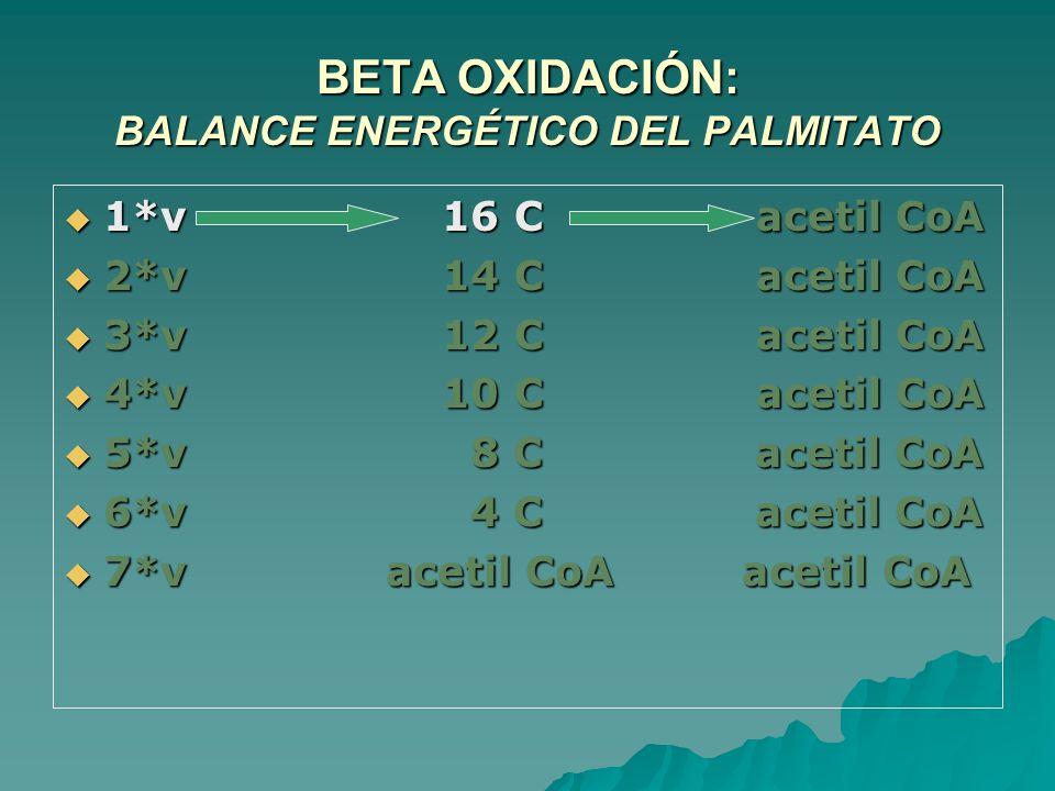 BETA OXIDACIÓN: BALANCE ENERGÉTICO DEL PALMITATO 1*v 16 C acetil CoA 1*v 16 C acetil CoA 2*v 14 C acetil CoA 2*v 14 C acetil CoA 3*v 12 C acetil CoA 3*v 12 C acetil CoA 4*v 10 C acetil CoA 4*v 10 C acetil CoA 5*v 8 C acetil CoA 5*v 8 C acetil CoA 6*v 4 C acetil CoA 6*v 4 C acetil CoA 7*v acetil CoA acetil CoA 7*v acetil CoA acetil CoA
