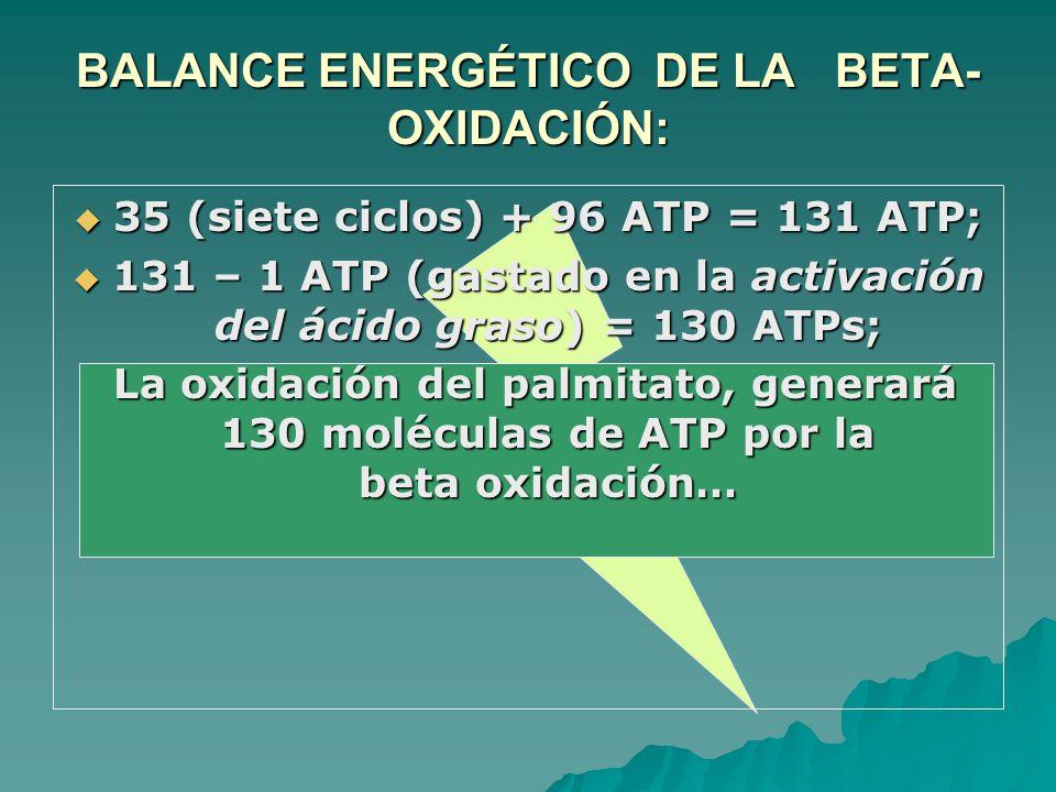 35 (siete ciclos) + 96 ATP = 131 ATP; 35 (siete ciclos) + 96 ATP = 131 ATP; 131 – 1 ATP (gastado en la activación del ácido graso) = 130 ATPs; 131 – 1 ATP (gastado en la activación del ácido graso) = 130 ATPs; La oxidación del palmitato, generará 130 moléculas de ATP por la beta oxidación… La oxidación del palmitato, generará 130 moléculas de ATP por la beta oxidación… BALANCE ENERGÉTICO DE LA BETA- OXIDACIÓN: