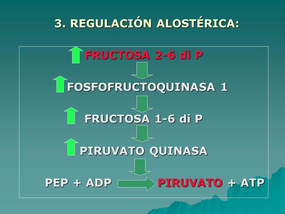 FRUCTOSA 2-6 di P FOSFOFRUCTOQUINASA 1 FOSFOFRUCTOQUINASA 1 FRUCTOSA 1-6 di P PIRUVATO QUINASA PEP + ADP PIRUVATO + ATP PEP + ADP PIRUVATO + ATP 3.