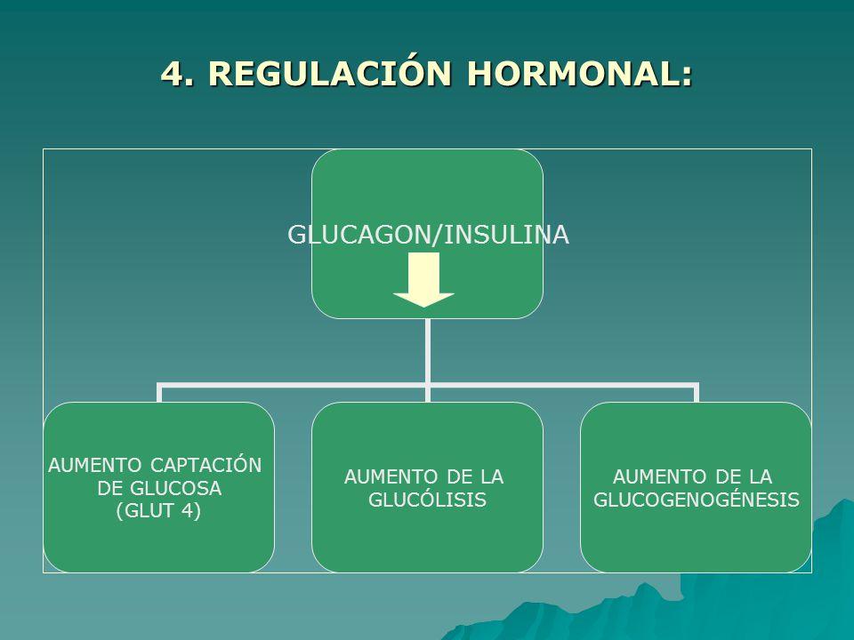 4. REGULACIÓN HORMONAL: GLUCAGON/INSULINA AUMENTO CAPTACIÓN DE GLUCOSA (GLUT 4) AUMENTO DE LA GLUCÓLISIS AUMENTO DE LA GLUCOGENOGÉNESIS