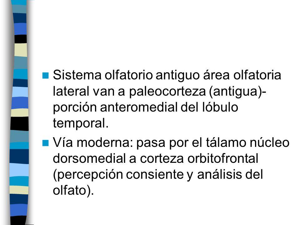 Sistema olfatorio antiguo área olfatoria lateral van a paleocorteza (antigua)- porción anteromedial del lóbulo temporal.