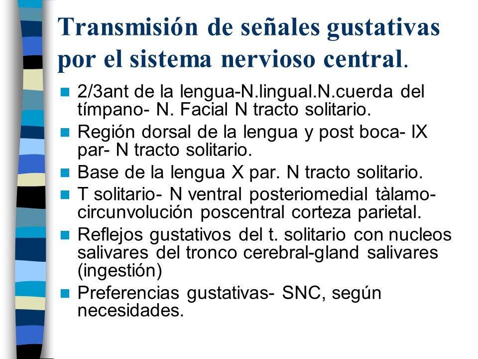 Transmisión de señales gustativas por el sistema nervioso central.