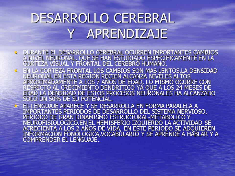 DESARROLLO CEREBRAL Y APRENDIZAJE DESARROLLO CEREBRAL Y APRENDIZAJE DURANTE EL DESARROLLO CEREBRAL OCURREN IMPORTANTES CAMBIOS A NIVEL NEURONAL, QUE S