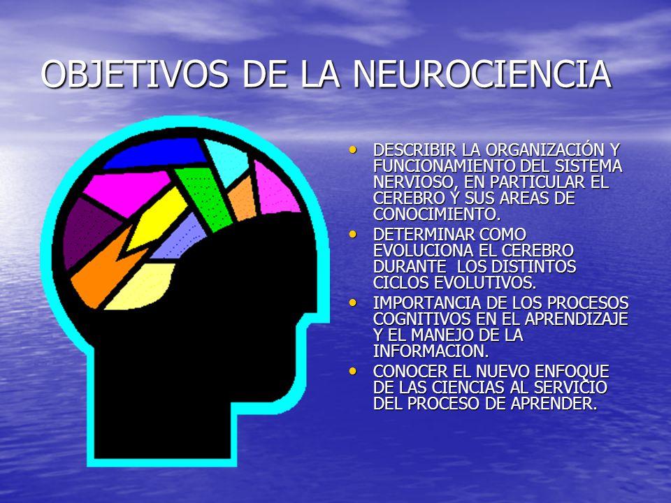 OBJETIVOS DE LA NEUROCIENCIA DESCRIBIR LA ORGANIZACIÓN Y FUNCIONAMIENTO DEL SISTEMA NERVIOSO, EN PARTICULAR EL CEREBRO Y SUS AREAS DE CONOCIMIENTO. DE