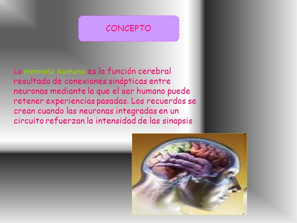 CONCEPTO La memoria humana es la función cerebral resultado de conexiones sinápticas entre neuronas mediante la que el ser humano puede retener experiencias pasadas.