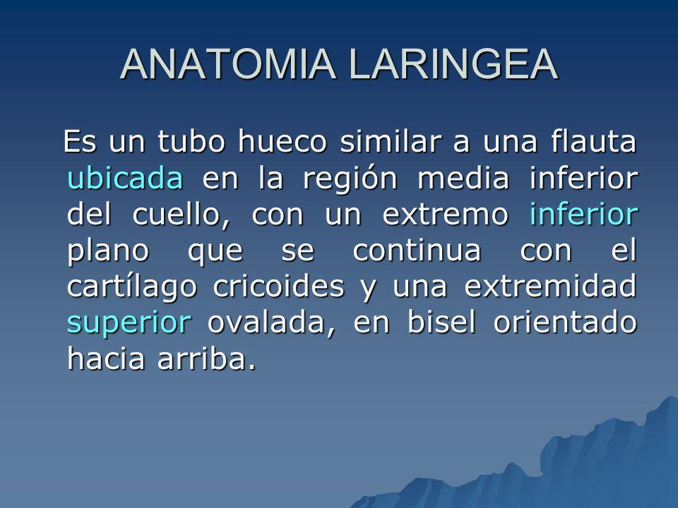 Inervación IX par-Espinal X par-Neumogastrico – Vago Fibras motoras(Laringeo inferior) Fibras sensitivas(Laringeo sup) Fibras secretoras Parasimpáticos Simpáticas( ganglio cervical sup )