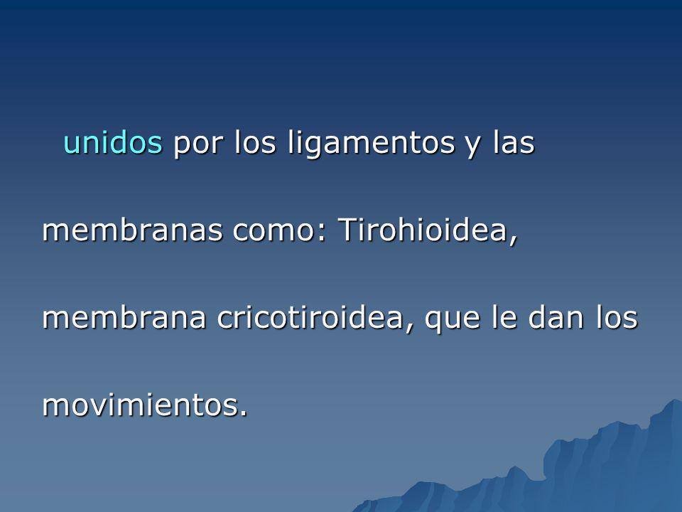 LIGAMENTOS Tiroaritenoideos superior ( bandas ventriculares ) Tiroaritenoideos inferior ( cuerdas vocales ) Aritenoepiglotico