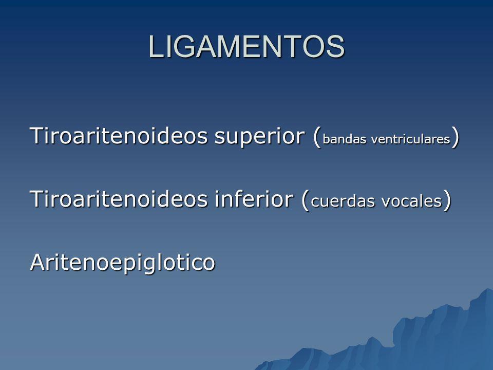 Intrínsecos -Interaritenoideo (impar) -Tiroaritenoideo (M vocal) -Cricoaritenoideo Post -Cricotiroideo FUNCION Constrictor de la glotis Constrictor glotis- Tensor ccvv Dilatador de la glotis Tensor CCVV(N laringeo sup.) MUSCULOS