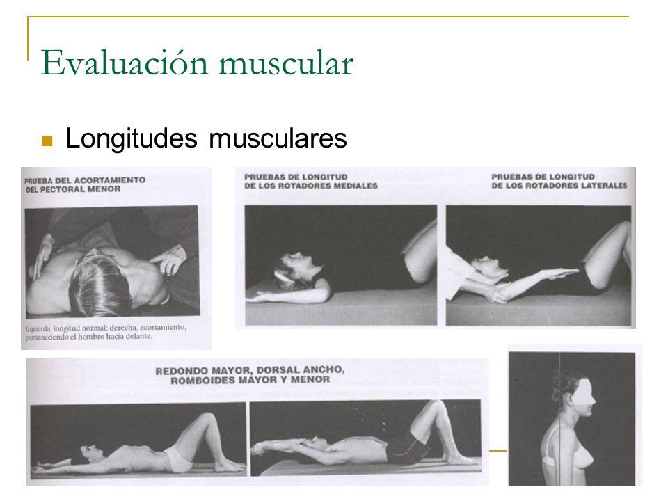 Evaluación muscular Longitudes musculares