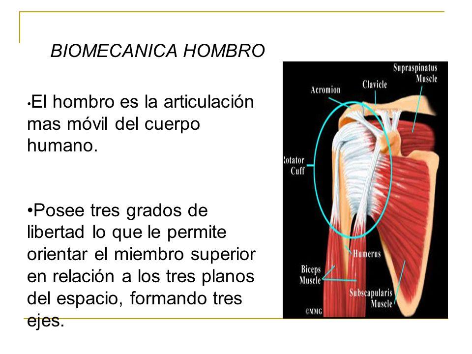 BIOMECANICA HOMBRO El hombro es la articulación mas móvil del cuerpo humano.