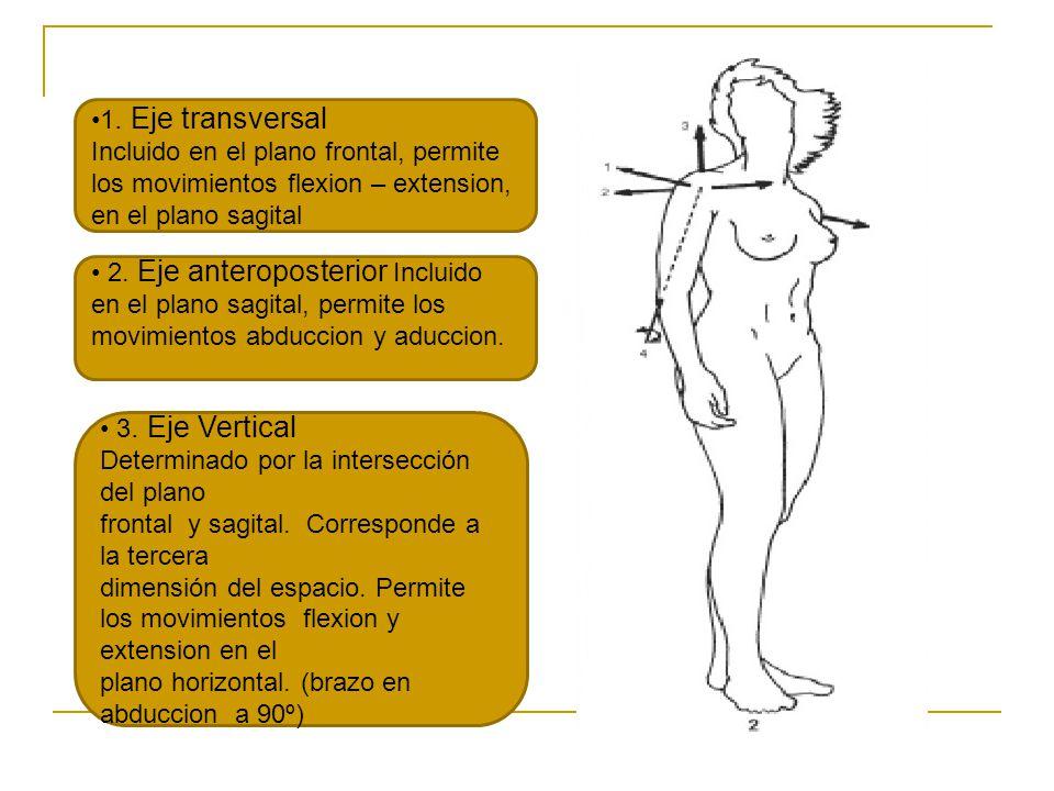 1. Eje transversal Incluido en el plano frontal, permite los movimientos flexion – extension, en el plano sagital 2. Eje anteroposterior Incluido en e