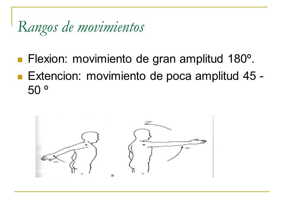 Rangos de movimientos Flexion: movimiento de gran amplitud 180º.
