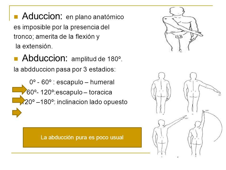 Aduccion: en plano anatómico es imposible por la presencia del tronco; amerita de la flexión y la extensión.