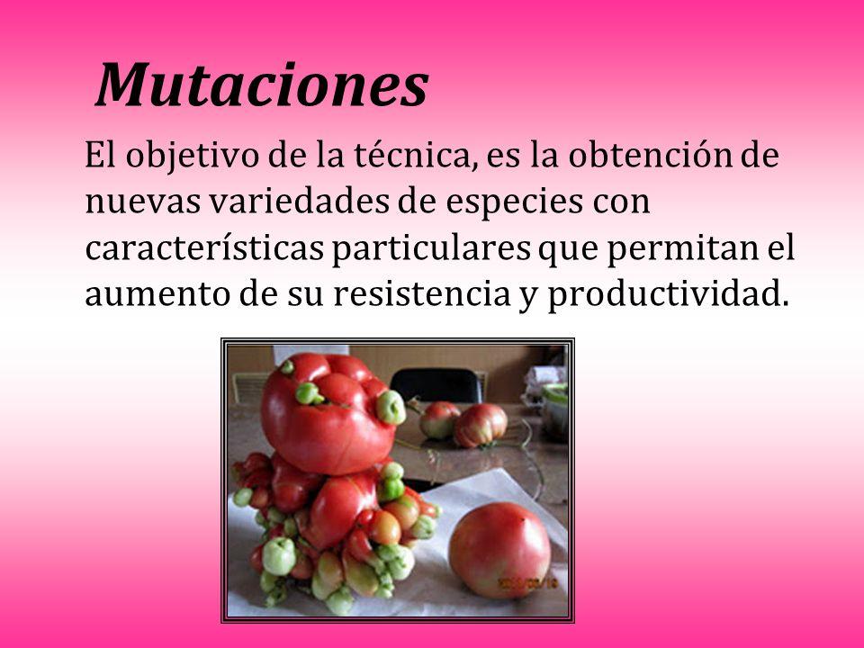 Mutaciones El objetivo de la técnica, es la obtención de nuevas variedades de especies con características particulares que permitan el aumento de su resistencia y productividad.