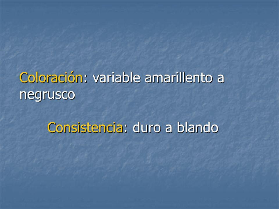 Coloración: variable amarillento a negrusco Consistencia: duro a blando