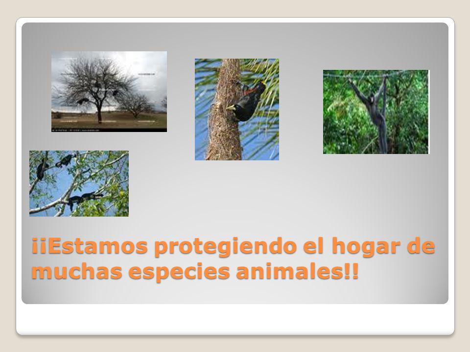 ¡¡Estamos protegiendo el hogar de muchas especies animales!!