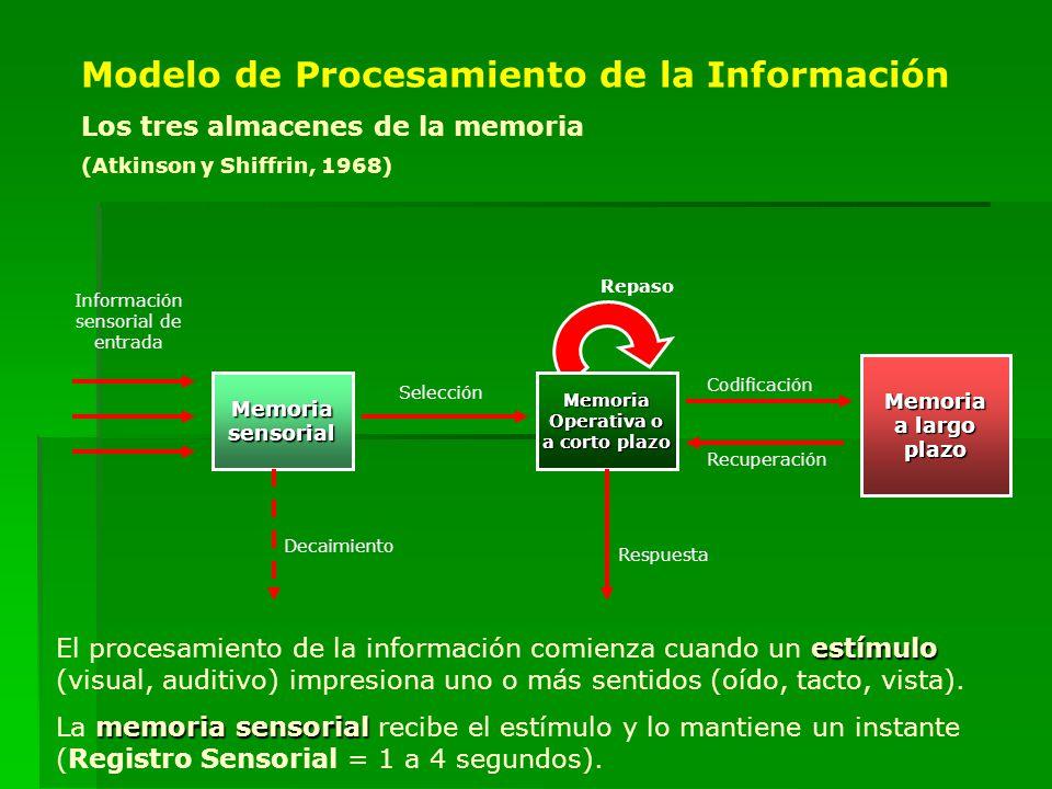 Información sensorial de entrada MemoriasensorialMemoria Operativa o a corto plazo Memoria a largo plazo Selección Codificación Recuperación Decaimien