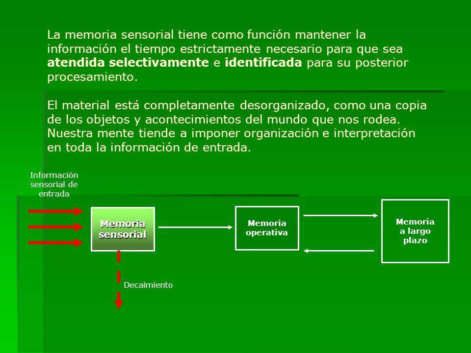 Es aquí donde ocurren tres procesos: A.Atención (selectiva) A.Atención (selectiva), proceso que consiste en seleccionar algunos de los muchos datos posibles (estímulos).
