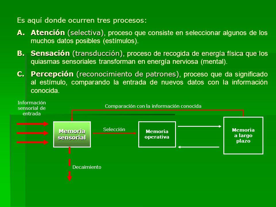 Es aquí donde ocurren tres procesos: A.Atención (selectiva) A.Atención (selectiva), proceso que consiste en seleccionar algunos de los muchos datos po